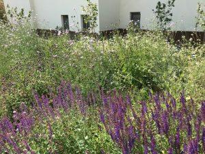 Blütenreiche Kelkheim