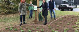 PM – Neuer Lebensraum für Insekten in Flörsheim